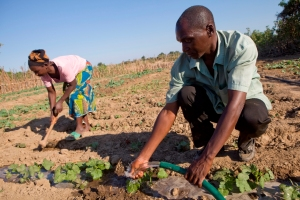 Ricy watering his crops in Zambia