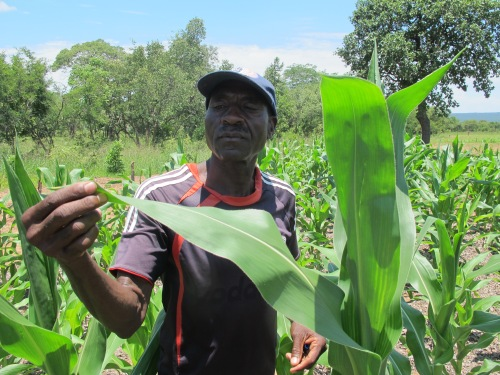 CAFOD's support has helped Mpofu to increase the amount of food he grows