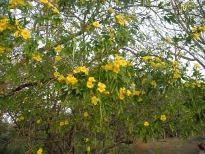 Flowers in Nicaragua