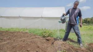 John waters crops beside his greenhouse - Kenya